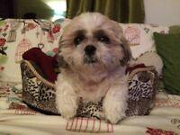 Babysit my dog!!