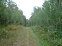 Multiple Parcels of Land - Financing Available!