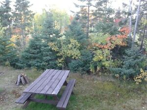 Fully Furnished Private 2 Bedroom Cottages Port Blandford St. John's Newfoundland image 10