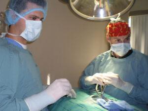 Pet Laparoscopic Surgery Option for Eastern Ontario in KINGSTON!
