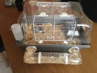 Hamster cage with 2 dwarf hamsters