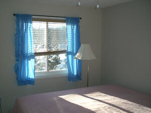 Single house (4 bedrooms) available on March 1st Kitchener / Waterloo Kitchener Area image 3