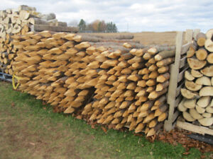 Fence stakes  { sharpened }
