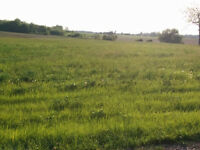 10 acres of standing, grassy hay in Lambeth area