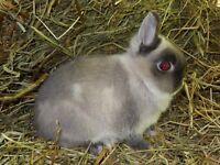 Élevage de lapins à vendre
