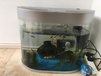 Fish tank and cold water fish for sale - Collection Only