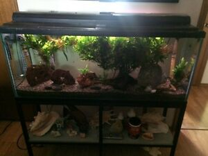 Fish with 50 gallon tank and accessories