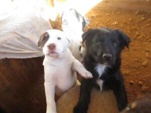 adorable puppys