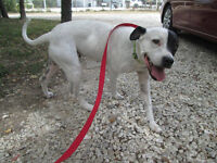 PENNY (PATCHES) - Foster & Forever Home Needed!!!