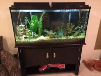 75 gallon aquarium with all accessories