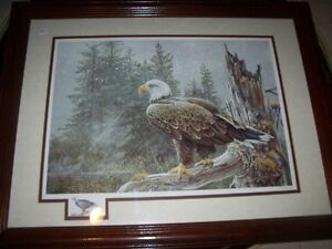 Eagle in the Forest