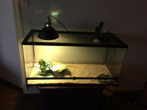 Adult bearded dragon for sale