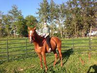 6 year old thoroughbred mare.