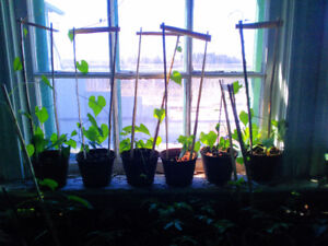 Well Started Plants