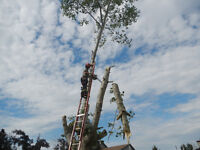 TREE REMOVAL, DANGEROUS TREE REMOVAL, FALLER for hire