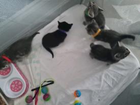Beautiful kittens