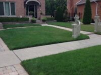 GRASS CUTTING, LAWN CARE, SOD, FERTILIZATION & MUCH MORE