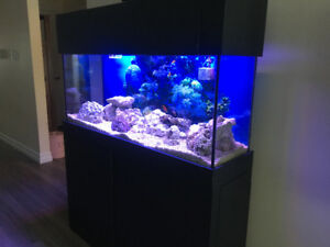 55 gallon aquarium set - Valley,NS