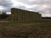 2nd Cut Alfalfa Hay