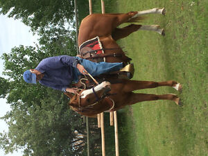 Beautiful 7 year old paint mare well started