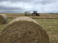 Horse Feed Excellent quality Meadow Hay (fertiliser free)