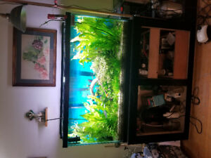 Aquarium on sale well maintained$500 Or best offer