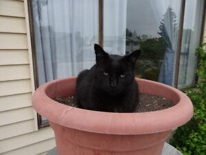 Missing  Lost Cat