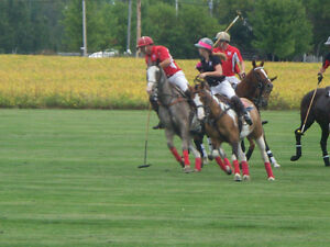 POLO! DON'T JUST WEAR IT: PLAY IT!
