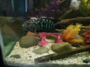 Cichlids for sale & 180 gallon set up. NO TRADES.