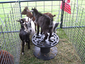 Mobile Petting Zoo for Birthdays/Seniors homes/Special events Peterborough Peterborough Area image 5