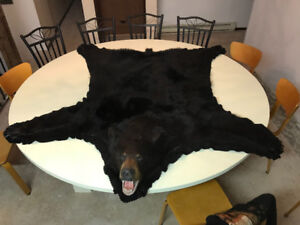 BLACK BEAR RUG - 5 ft 10 inches.