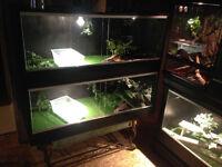 Grand terrarium pour reptiles / Large reptile terrarium   4x2x2