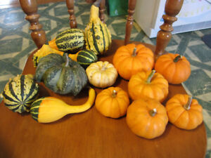 Mini pumpkins and decorative gourds