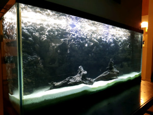 Looking to buy African cichlids