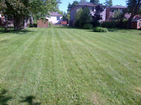GRASS CUTTING & LAWN CARE *FREE AEARATING OR FERTILIZING