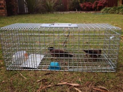 Humane Live Bird Trap ⁄ Indian Myna Bird Friendly Cage -Brand New