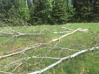 Windstorm tree and brush cleanup