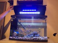 80L tropical fish tank with fish and accessories