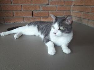 FOUND CAT (Caledonia)