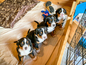 Adopt Dogs & Puppies Locally in Canada | Pets | Kijiji
