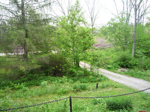 Country living in the city - inside Nature preserve - Privacy London Ontario image 10