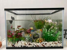 Black fish Tank 24 Litre