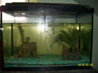 20 gal tank with bottom feeder