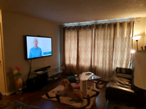 Newly Renovated Decent room for rent in the Main-floor for $550