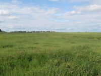 160 Acres of prime play, hay or grazing land. MAKE AN OFFER