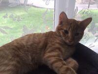20 weeks old kitten