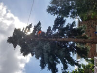 TREE PLANTING,  FALL CLEANUP, ISHA CERTIFIED ARBORIST
