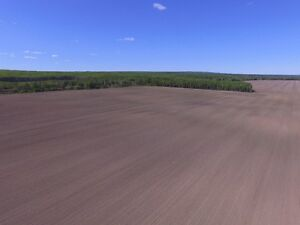 3 Parcels of Farmland - Unreserved Auction - Manning AB