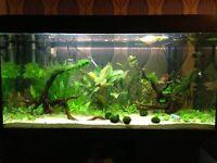 350L aqua one fish tank