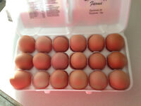 Fresh Brown free range farm eggs for sale